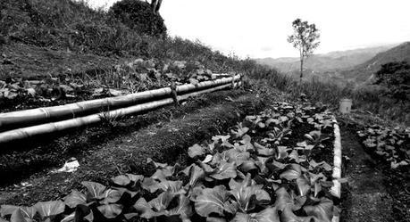 Agroecological plot in Mérida state, Venezuela. (Otras Voces en Educación)