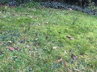 January lawn mowing