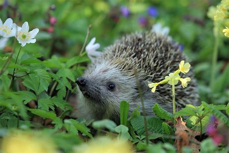 How to Attract Wildlife to Your Garden this Spring