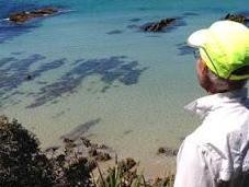 Broulee, Australia: Pristine Beaches Friendly Wildlife, Guest Post Scheaffer