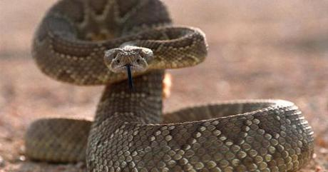 Criminal Mischief: The Art and Science of Crime Fiction: Episode #10: Rattlesnakes and Murder