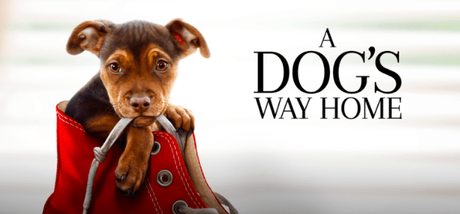 """A Dog's Way Home"" In Theaters Friday January 11th"