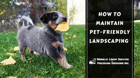 How to Maintain Pet-Friendly Landscaping for 2019
