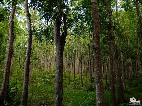 DENR Reforestation area