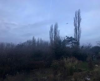 A letter to the garden - January 2019