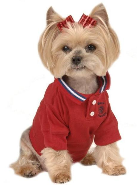4 Tips to Dressing Your Dog in Style