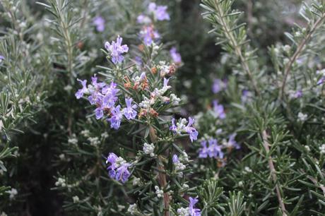 Garden Bloggers Bloom Day – Jan 2019