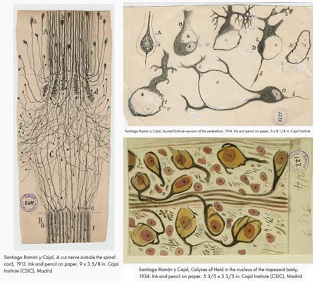 How The Father Of Neuroscience Used The Power Of Illustration