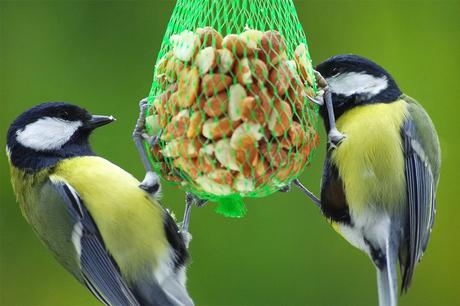 Making your own birdseed bombs: What you need to know