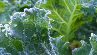 First Frost 2011