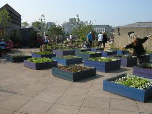 rooftop garden of the Queen Elizabeth Hall