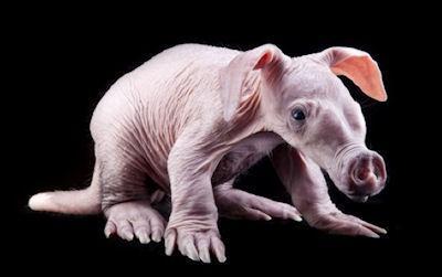 Baby Aardvark Born At Busch Gardens