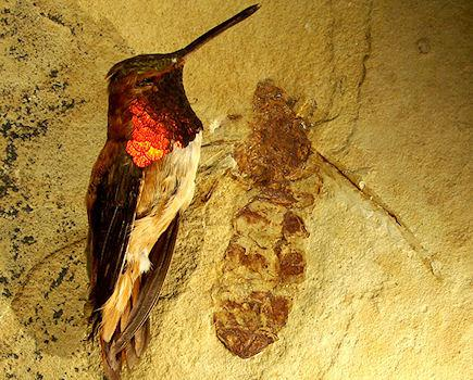 Fossil Unearthed Of 50 Million-Year-Old Giant Ant