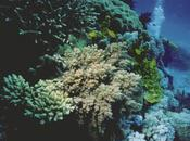 Coral Mining Causes Islands Sink