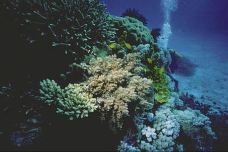 Coral mining causes islands to sink