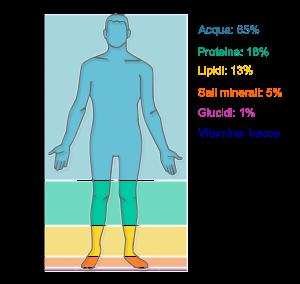 Human body external features
