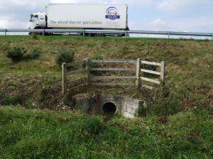 Badger tunnel under road
