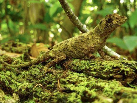 Fantastic wildlife in the Costa Rican jungle
