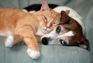 Why Create a Pet Fund?
