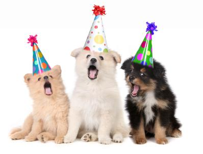 Celebrate Your Rescue Dog's First Day of Freedom: Puppy Parties