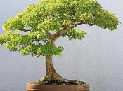 Most Awesome Bonsai Trees Earth