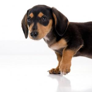 On Housetraining A Puppy: Teaching Your Pup To Hold It