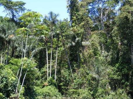 Bad news for the rainforest