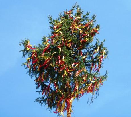 maypole tree up close