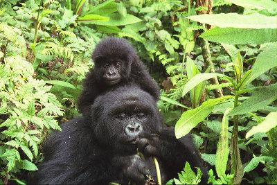 Virunga National Park, DR Congo