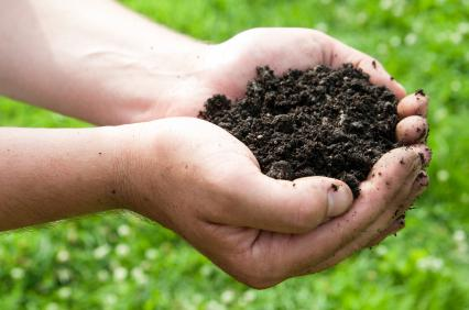 Topsoil Promotes Safe and Healthy Growth