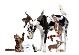 Which Type of Pet is Right for Your Lifestyle?