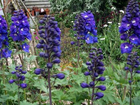 Upwaltham Barns, Sussex – A National Garden Scheme garden