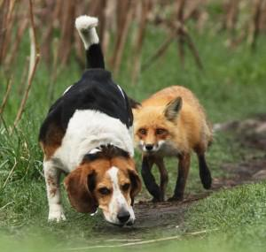 World's worst Hunting Dog!