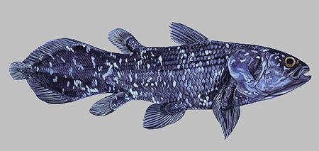The Man Who Swims With Coelacanths