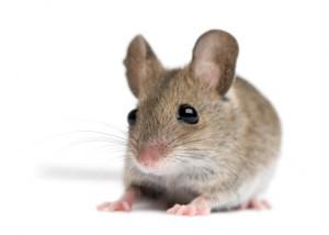 You Don't Have to Be an Exterminator To Get Rid Of Mice … You Just Need the Right Live Mouse Trap