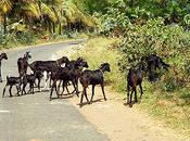 Animals Crossing Road