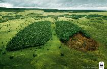 World Environment Day and Australian forest regeneration