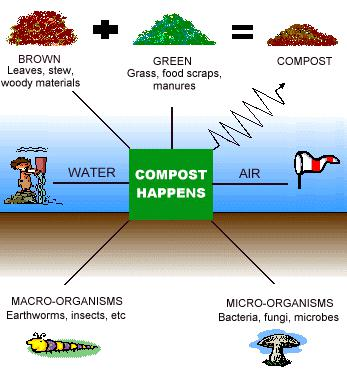 Backyard Composting 101