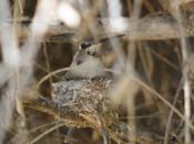 Windsor Beach Birding