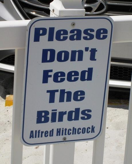 Don't Feed The Birds