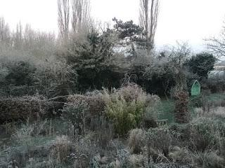 The not snowy garden