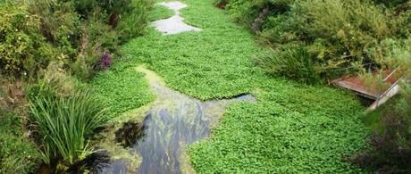 Invasive Plants in UK