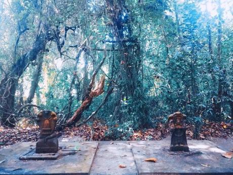 My experience of 40 days of Shambhavi Mahamudra Kriya