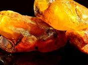Amber: Fossilized Resin Prehistoric Tree