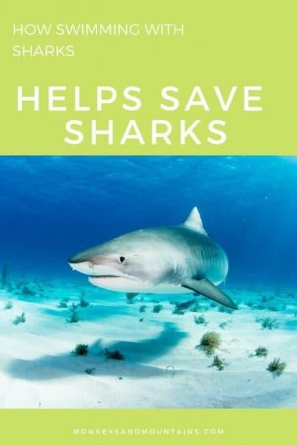 How Swimming with Sharks Helps Save Sharks