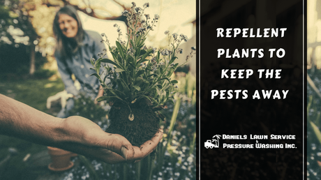 Repellent Plants to Keep the Pests Away