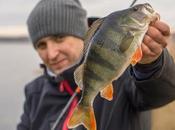 Perch Fishing Tips Catch