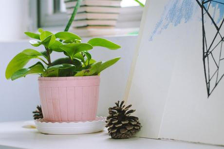 The Beginner's Guide to Indoor Gardening