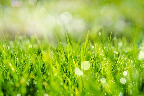 How To Safely Use Pesticides On Your Lawn