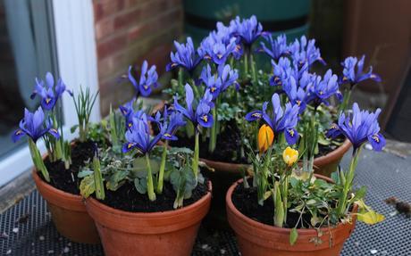 Garden Bloggers Bloom Day – Feb 2019